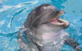 Дельфінарії гуманітарна проблема